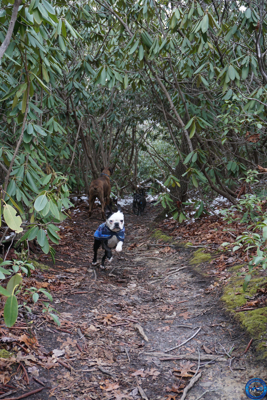 trail2