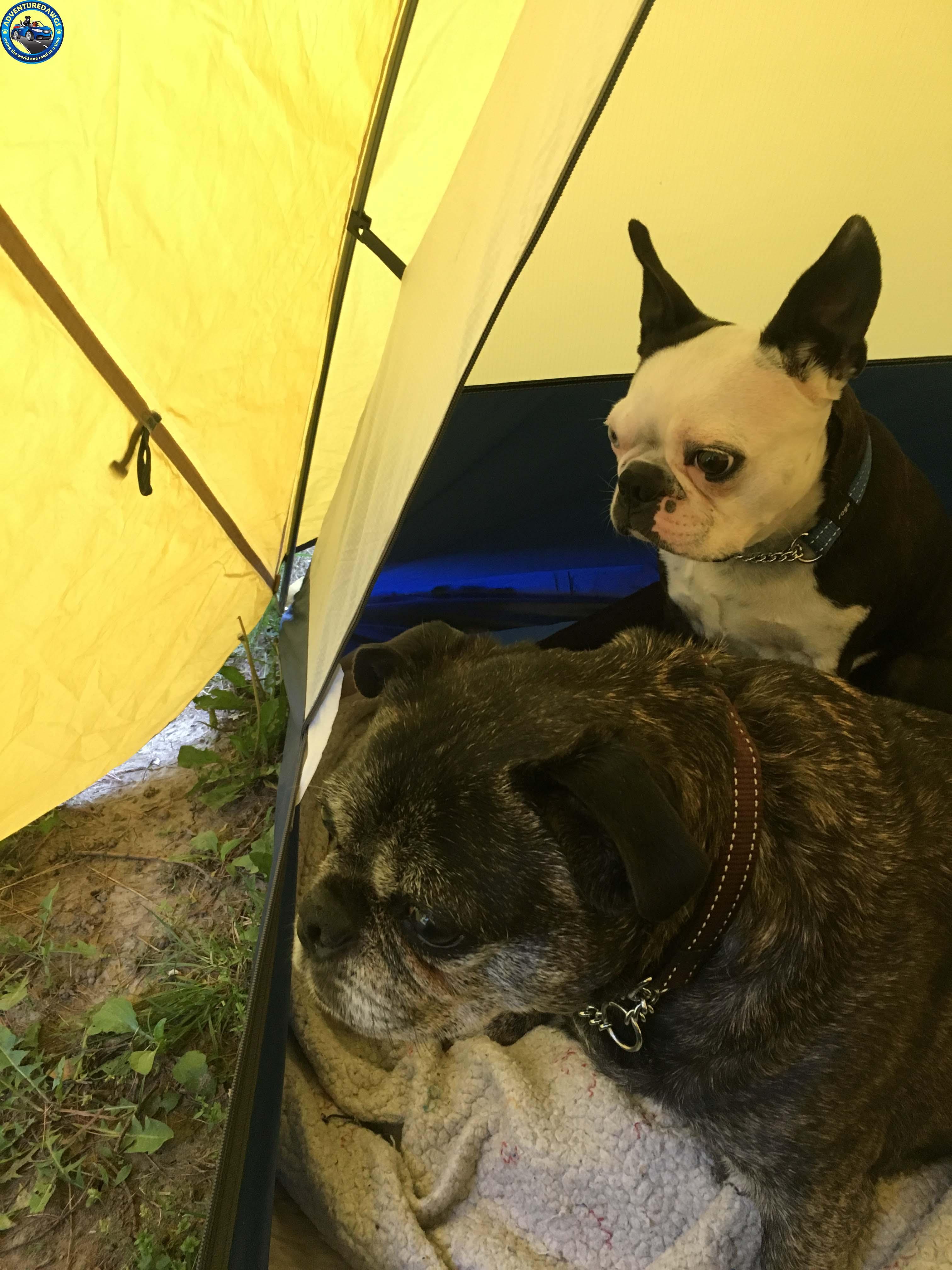 boys tent